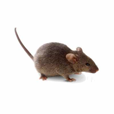 rodent-removal