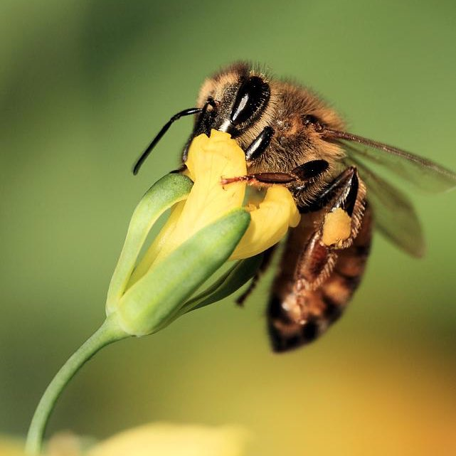 Professional Bee And Wasp Removal In Arizona Crandell Pest Control
