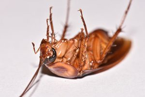 pest control for cockroaches in mesa arizona