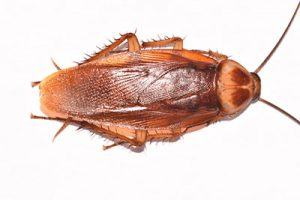 what does a waterbug look like?