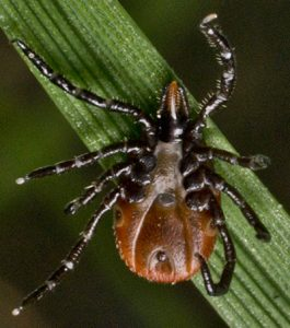 pest control for ticks queen creek, az