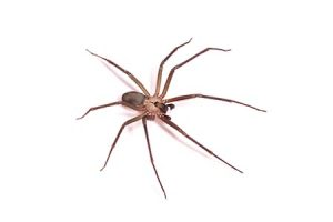 best spider exterminator queen creek