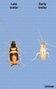 cockroach pest control 85298 arizona