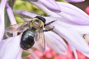 carpenter bee pest control queen creek, az
