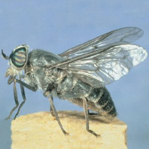 exterminator for flies queen creek arizona