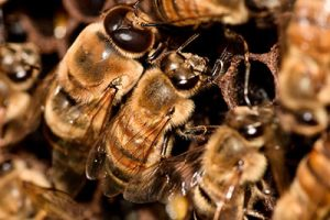 honey bee pest control queen creek, az