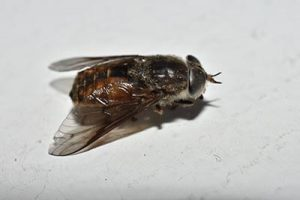horse fly exterminator queen creek, az