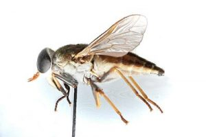 horse fly pest control queen creek