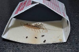 exterminator for centipedes in queen creek