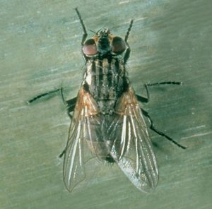 how can I get rid of flies in queen creek az