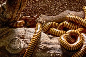 exterminator for millipedes queen creek, az