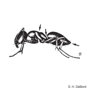 house ant pest control Phoenix Arizona