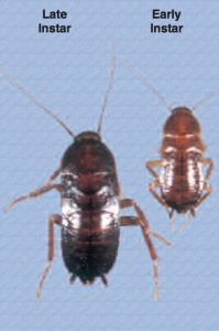 cockroach pest control queen creek arizona